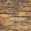 Old  wooden texture  with termite — Stock Photo #54917163
