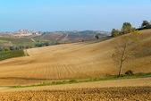 Rural view of Monferrato hills — Stock Photo