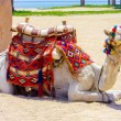 Camel on african desert beach waiting for tourists trip — Stok fotoğraf #69964579