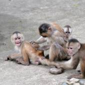 Happy family (in monkey's conception) in Misahualli, Amazonia — Stock Photo