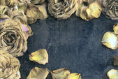 Dried roses with the aged effect — Stock Photo