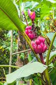растение из джунглей. амазония, эквадор — Стоковое фото