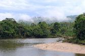 Amazon, View of the tropical rainforest, Ecuador — Stock Photo