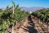 Vineyards in Cafayate, Argentina — Stock Photo