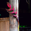 Heliconia flower decorated bamboo hut — Stock Photo #65324287