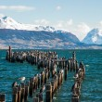 King Cormorant colony, Old Dock, Puerto Natales — Stock Photo #73946601