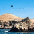 Ballestas Islands, Paracas National Reserve in Peru — Stock Photo #74483331