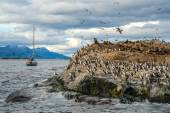 King Cormorant colony, Beagle Channel, Argentina - Chile — Stock Photo