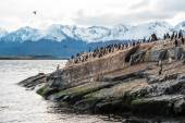 Sea lion and King Cormorant colony in the Beagle Channel — Stock Photo