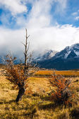 Autumn in Patagonia. The Torres del Paine National Park — Stockfoto