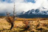 Autumn in Patagonia. The Torres del Paine National Park — Stock Photo