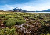 Snow capped Parinacota Volcano over the Lake Chungara, Chile — Stock Photo