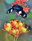 Butterflies on exotic tropical flower, Ecuador — Stock Photo