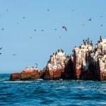 Ballestas Islands, Paracas National Reserve. Peru — Stock Photo #78727044