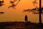 Silhouette of pine tree at sunrise — Stock Photo