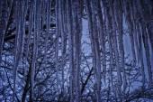 Buz sarkıtları — Stok fotoğraf