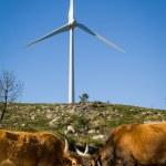 Wind turbines - Stock image — Stock Photo #74096299