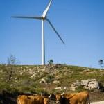 Wind turbines - Stock image — Stock Photo #74096331