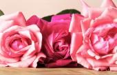 玫瑰 — 图库照片