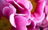 迷离的花 — 图库照片