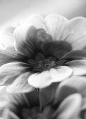 Blurred flower — Stock Photo