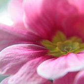 Rozmazané květ — Stock fotografie