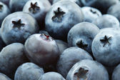 Close up of a heap of blueberries — Stock Photo