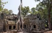 Giant strangler fig over a khmer temple — Foto de Stock