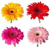 Flower buds — Stock Photo