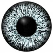 Eye for character — Stock Photo