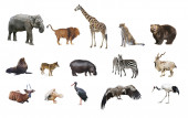 A collage of wild animals — Stock Photo