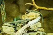 Reptiles in a terrarium — Stock Photo