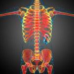 3d render medical illustration of the skeleton bone — Stock Photo #59247051