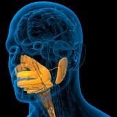 人間の消化器系の 3 d レンダリングの医療イラスト — ストック写真