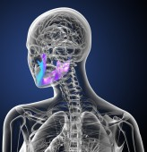 3d render medical illustration of the jaw bone — Stock Photo