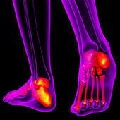 3d render medical illustration of the feet bone — Stock Photo