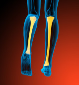 3d render medical illustration of the tibia bone — Stock Photo