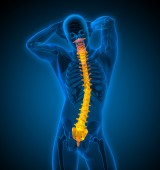 3d render medical illustration of the human spine — Stock Photo