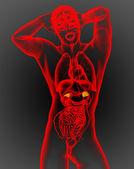3d render medical illustration of the adrenal  — Stock Photo