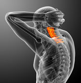 3d render medical illustration of the cervical spine — Stockfoto