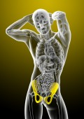 3d render medical illustration of the pelvis bone  — Stock Photo