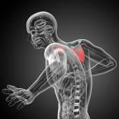 3d render medical illustration of the scapula bone — Zdjęcie stockowe