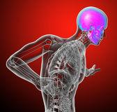 3d render medical illustration of the human skull — Stock Photo