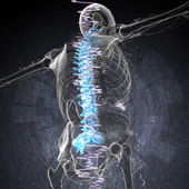 3d render medical illustration of the painful back  — Stock Photo