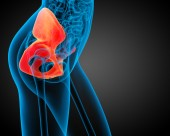 3d render de ilustración médica del hueso de la pelvis — Foto de Stock