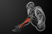3d render medical illustration of the tibia bone  — Foto Stock