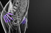 3d render medical illustration of the metacarpal bone  — Foto Stock