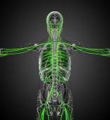 3d 渲染医学插图的血管系统 — 图库照片