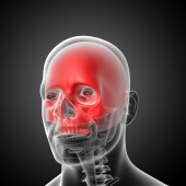3d render medical illustration of the upper skull  — Stock Photo