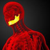 3d оказанные иллюстрации - кость челюсти — Стоковое фото